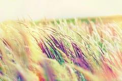Beautiful nature - high grass Stock Photos