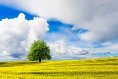 Beautiful nature landscape Royalty Free Stock Photography