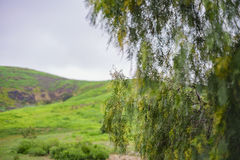 Beautiful nature landscape on Ascot Hills Park Stock Photos