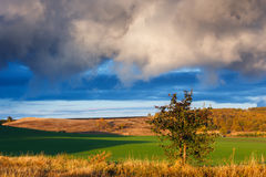 Beautiful nature landscape. Cloudy sunset on green fields Stock Photography