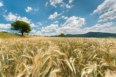 Beautiful nature landscape with crop Royalty Free Stock Photo