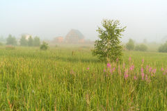 Beautiful nature landscape with homes and foggy meadow Stock Images