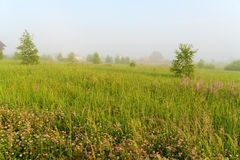 Beautiful nature landscape with homes and foggy meadow Stock Image