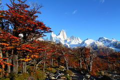 Beautiful nature landscape with Mt. Fitz Roy as seen in Los Glaciares National Park, Patagonia, Argentina.  Stock Photo