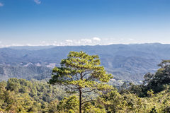 Beautiful nature and landscape of Pai, Mae-Hong-Sorn, Thailand. Beautiful background in forest and happiness Royalty Free Stock Photo
