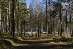 Beautiful nature and landscape photo of sunny spring day in forest in Sweden Scandinavia Europe. Beautiful nature and landscape photo of sunny spring day in stock photography