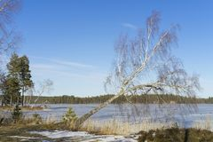 Beautiful nature and landscape photo of sunny spring day in Sweden at ice lake. Beautiful nature and landscape photo of sunny spring day in Sweden Scandinavia royalty free stock photo