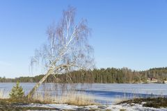Beautiful nature and landscape photo of sunny spring day in Sweden at ice lake. Beautiful nature and landscape photo of sunny spring day in Sweden Scandinavia stock image