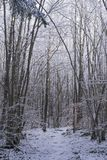 Beautiful nature and landscape photo of Swedish winter forest and trees Stock Image