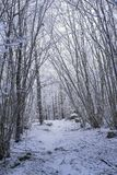 Beautiful nature and landscape photo of Swedish winter forest and trees Royalty Free Stock Photos