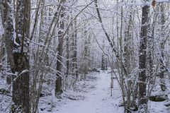 Beautiful nature and landscape photo of Swedish winter forest and trees Stock Images