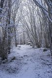 Beautiful nature and landscape photo of Swedish winter forest and trees. Nice cold day in the wood. Lovely details of branches with snow and frost. Calm royalty free stock images