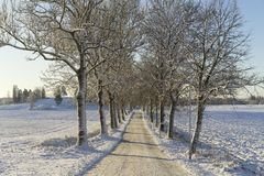 Beautiful nature and landscape photo of trees and long road in alley. In Katrineholm Sweden Scandinavia. Nice cold winter day with snow and frost on branches Stock Image