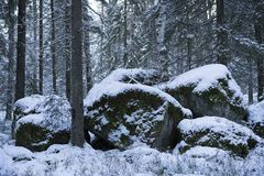Beautiful nature and landscape photo of winter forest in Sweden Scandinavia. Details of snowy big stones. Nice, peaceful dusk evening with trees and snow on royalty free stock photos