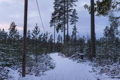 Beautiful nature and landscape photo of winter forest in Sweden Scandinavia. Snowy road with lamps. Nice, peaceful dusk evening with trees and snow on ground Stock Photos