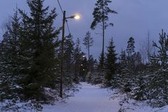Beautiful nature and landscape photo of winter forest in Sweden Scandinavia. Snowy road with lamps. Nice, peaceful dusk evening with trees and snow on ground Stock Images