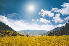 Beautiful nature landscape in the summer day Stock Photos