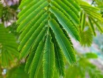 Beautiful arrangement of green in leaf amaranth royalty free stock photo
