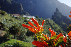 Beautiful nature in Masca Village, Tenerife Royalty Free Stock Image