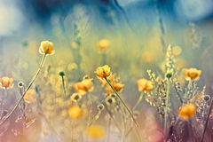 Beautiful nature - meadow flowers Stock Photography