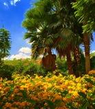 Beautiful Nature Royalty Free Stock Photos