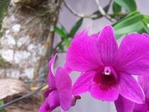 Orchid flower stock image