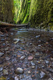 Beautiful nature in Oneonta gorge trail, Oregon. Royalty Free Stock Photography