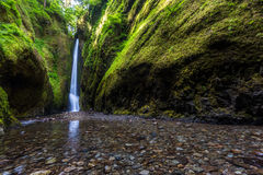 Beautiful nature in Oneonta Gorge trail, Oregon. stock photography