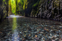 Beautiful nature in Oneonta gorge trail, Oregon. stock photo