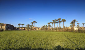 Beautiful nature ,palm trees, grass, sky and houses in Egypt Stock Photography