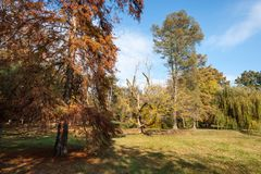 Beautiful nature in the park with yellow and orange autumn trees and grass and blue sky above royalty free stock photo