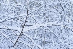 Nice details of trees and branches with white snow, frost and ice royalty free stock photo