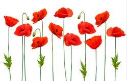 Beautiful nature poppy background. Vector vector illustration