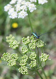 Beautiful nature in region Liptov, Slovakia Royalty Free Stock Photo