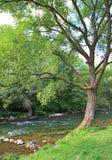 Beautiful nature in region Liptov, Slovakia Stock Photography
