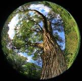 Beautiful nature in region Liptov, Slovakia Royalty Free Stock Image