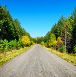 Road in golden autumn forest Stock Photo