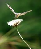 Beautiful nature scene. Butterfly on flower stock photos