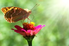Beautiful nature scene. Butterfly on flower on sunny day royalty free stock photos