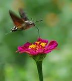 Beautiful nature scene. In garden stock images