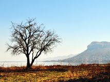 Beautiful nature scene. Of tree next to lake and mountain in background Stock Photography