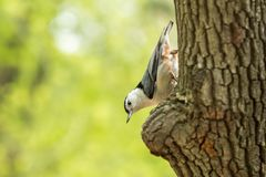 Macro shot of bird on the tree. Bird in the nature habitat. Stock Photo