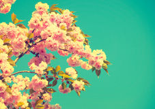 Beautiful nature scene with blooming tree Royalty Free Stock Photos