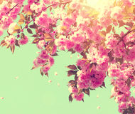 Beautiful nature scene with blooming tree royalty free stock images