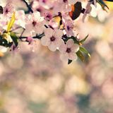Beautiful nature scene with blooming tree and sun. Easter Sunny day. Spring flowers. Orchard Abstract blurred background in. Springtime stock image