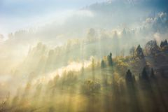 Beautiful nature scene in fog. Bursts of light come through haze among the trees down the hill. wonderful autumn atmosphere royalty free stock image