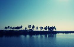 BEAUTIFUL NATURE. Scene of a river side where there are palm trees Royalty Free Stock Image