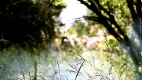 Beautiful nature scenes , smoke and the sun's rays stock footage