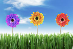 Beautiful Nature in Spring Royalty Free Stock Photography