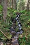 Beautiful nature and streams Stock Photo